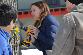 Professor Deirdre Murphy taps into a maple tree on the CIA's Hyde Park, NY campus in late March 2014. This first-time effort by students and faculty yielded about four gallons of maple syrup