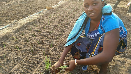 A woman in The Gambia learned the correct spacing of onions during a gardening training.