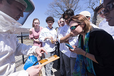 Beekeeper Dennis Macheska, who is also the associate dean—student affairs & housing at the CIA, points out the queen bee to CIA students as a colony is introduced into the college's apiary on May