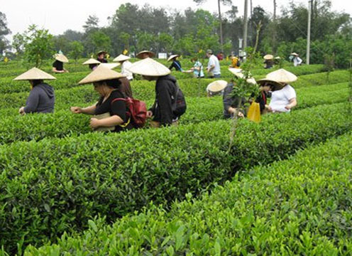 The CIA's culinary arts bachelor's degree program gives you the edge with opportunities to explore, expand, and experience your food dream! Photo: CIA bachelor's degree students visit a tea farm to gain insightful cultural knowledge about China's cuisine.
