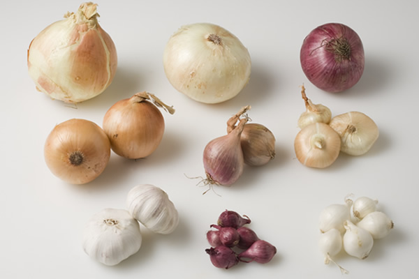 image of different types of onions at the CIA
